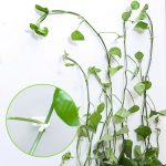 50pcs Invisible Wall Rattan Clamp Clip Invisible Wall Vine Climbing Sticky Hook Rattan Fixed Clip Bracket Plant Stent Supports