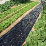 5~50m 5Holes Black Plastic Mulch Film Agricultural Vegetable Plants Grow Film Greenhouse Keep Warm Anti Grass Perforated PE Film