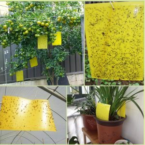 20Pcs Sticky Insect Traps Board Cockroaches Ant Mosquito Glue Pest Fly Trap Flying Insect Traps Catcher Killer Glue Stickers