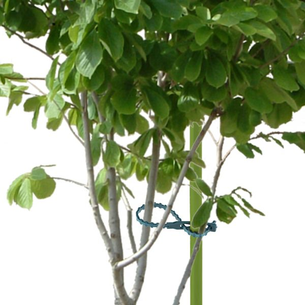 50pcs/lot 13.5CM/ 17CM Plastic Plant Cable Ties Reusable Cable Ties Greenhouse Grow Kits for Garden Tree Climbing Support