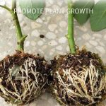 5/10PCS Adjustable Plant Rooting Ball Bonsai Grafting Rooting Growing Box Breeding Case for Garden Indoor Hydroponics device box